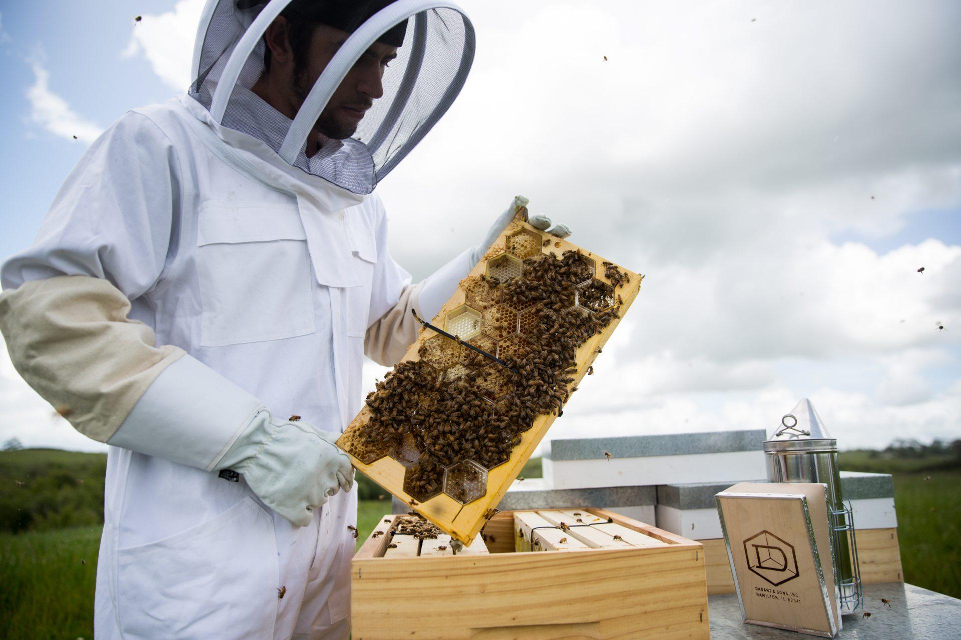 Manuka Health Raw Honey